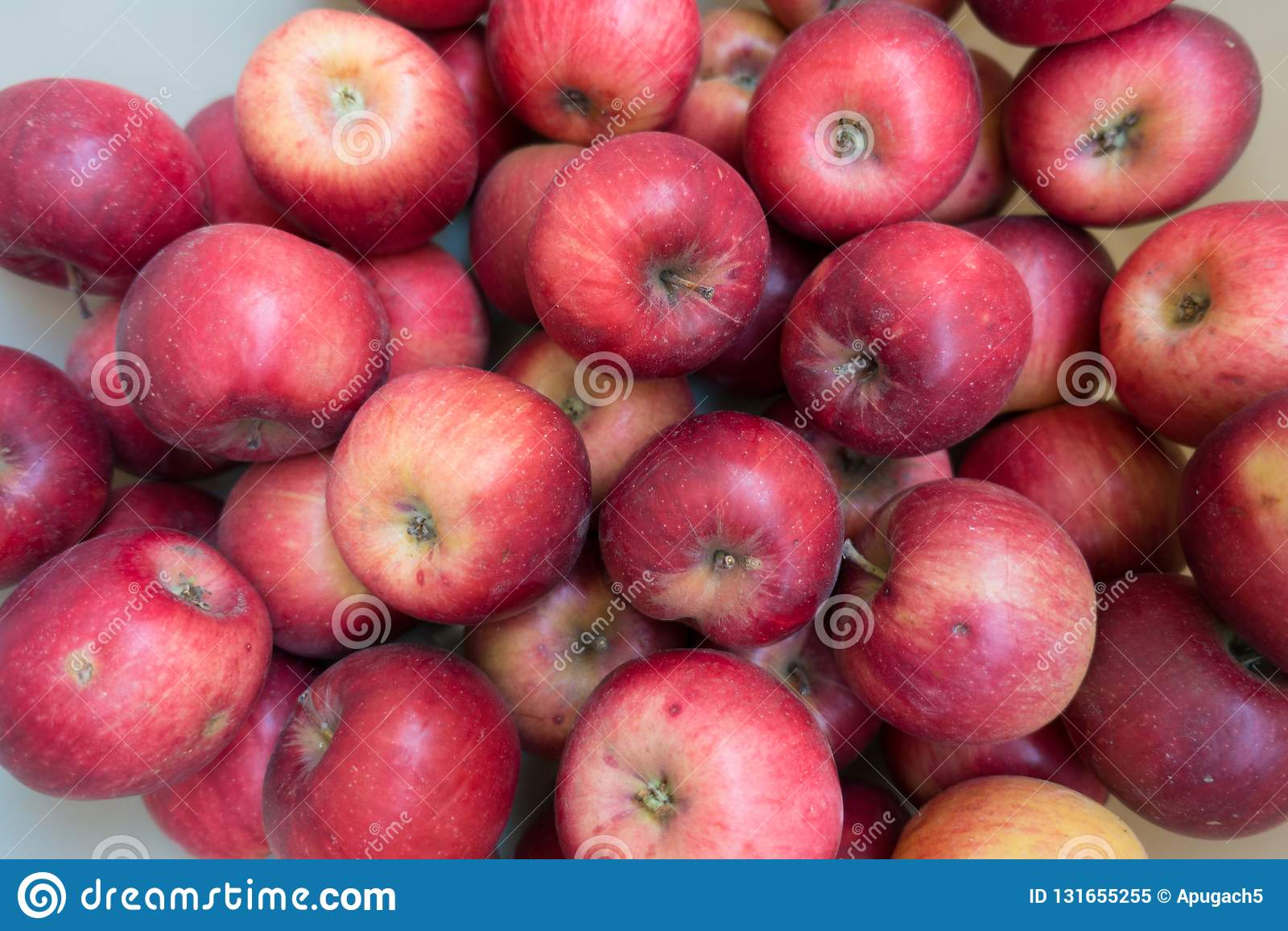 Massor av röda Jonathan äpplen i höst