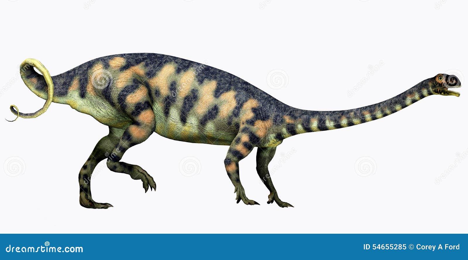 Massospondylus på vit