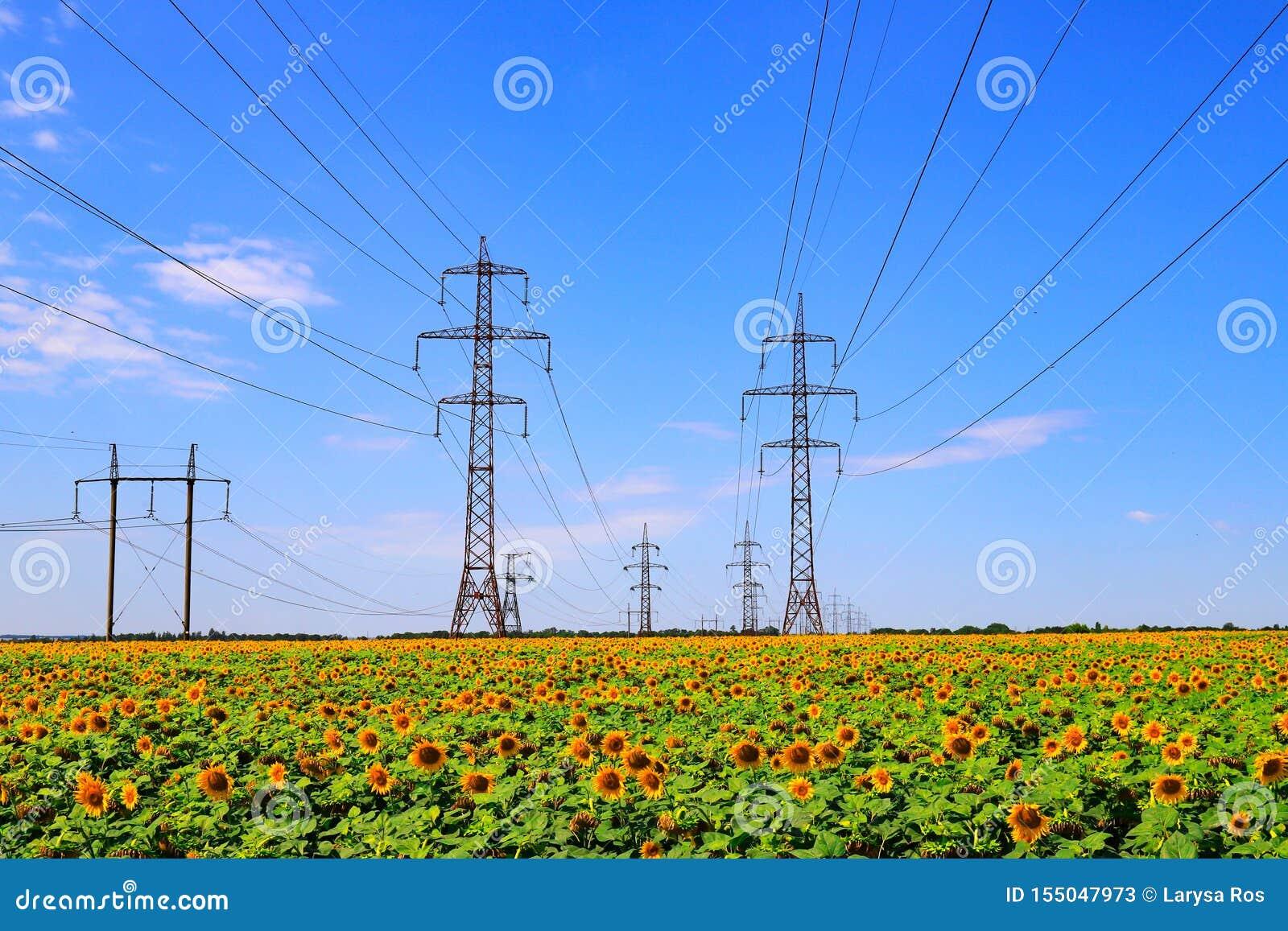 Masten van een lijn van de hoogspanningsmacht tegen de achtergrond van een gebied met zonnebloem Staalsteunen en draden macht