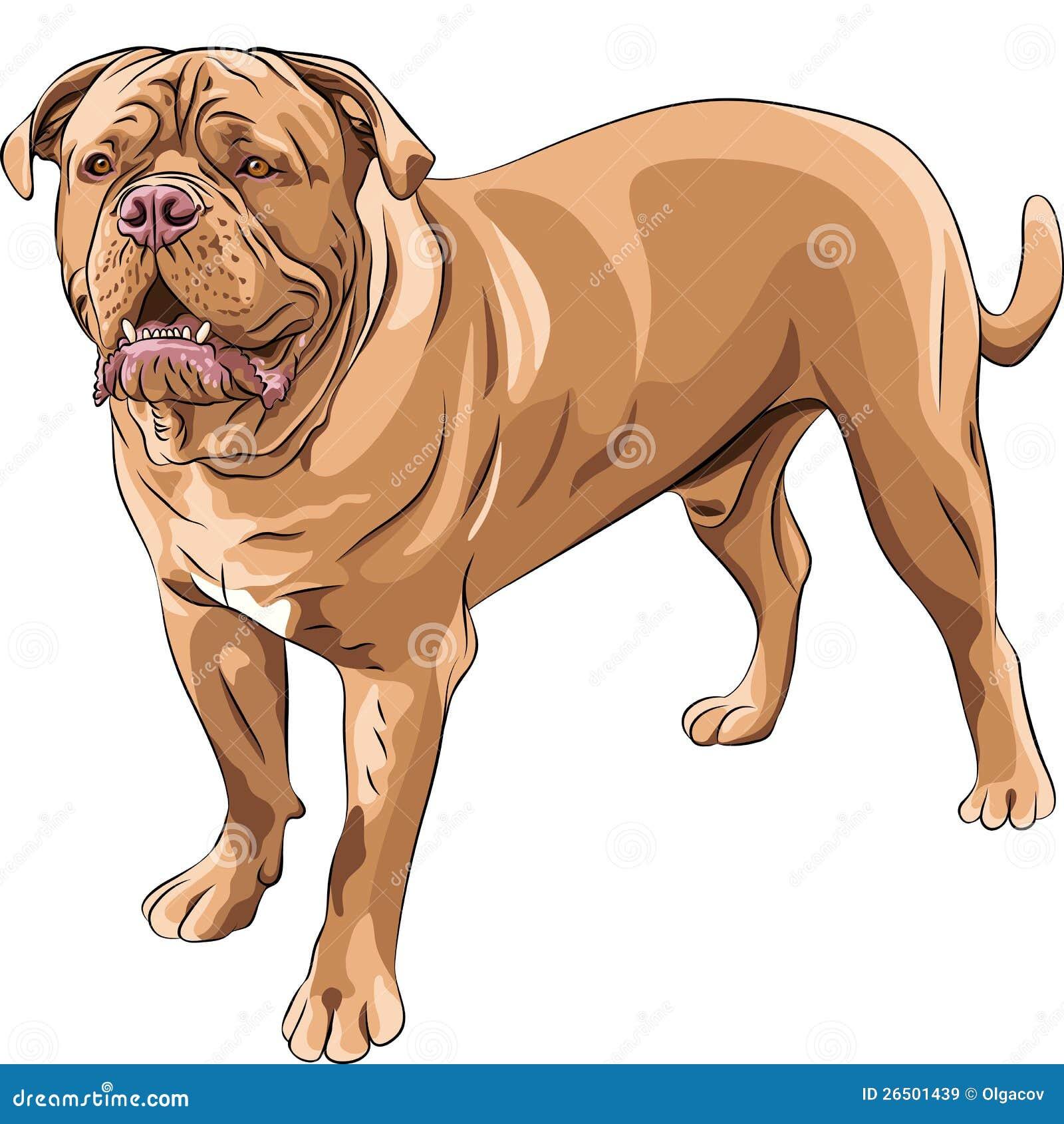 Mastiff do francês da raça do cão do vetor
