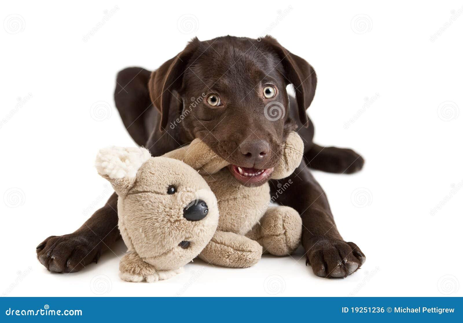 Mastigação do filhote de cachorro