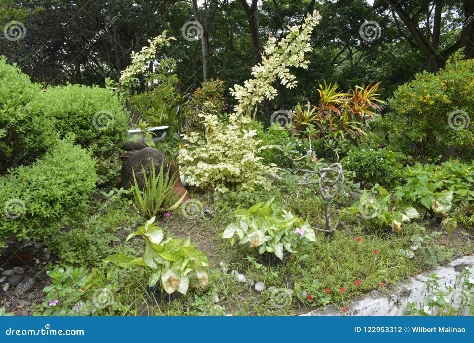 Matanao,南达沃省,菲律宾的市政霍尔的前提的栽培植物