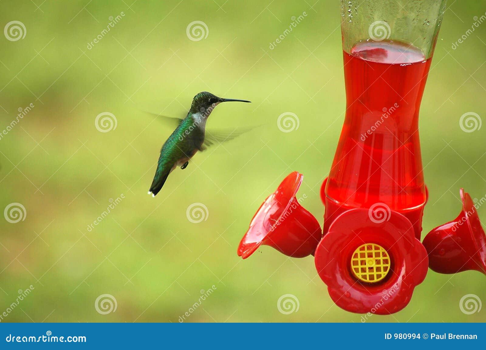 Matande hummingbird