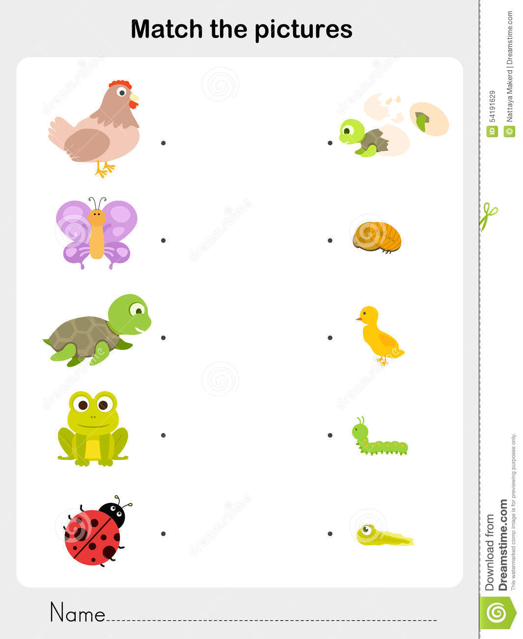 ... life cycle worksheet for education match animal life cycle worksheet