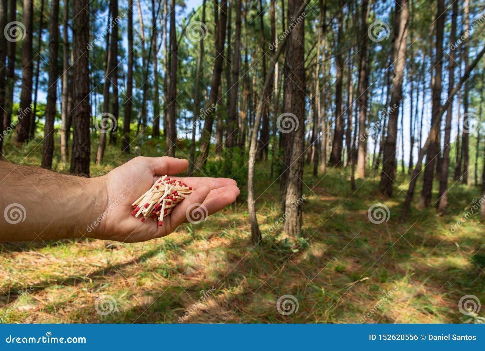 Match im Hand- und pinetreewald