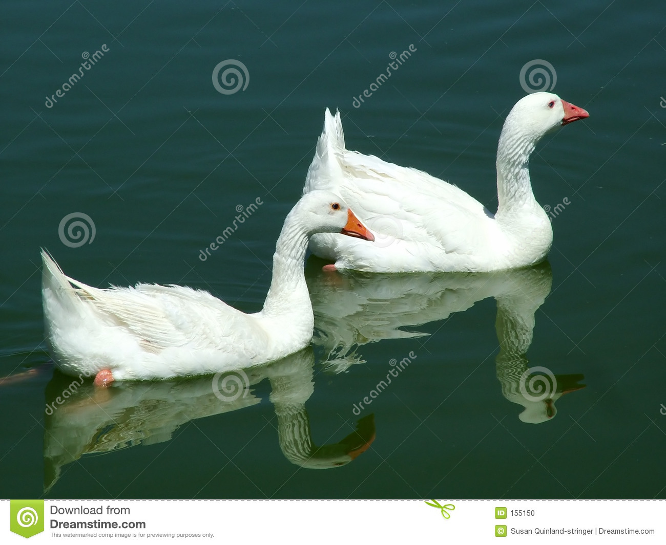 Mated Geese