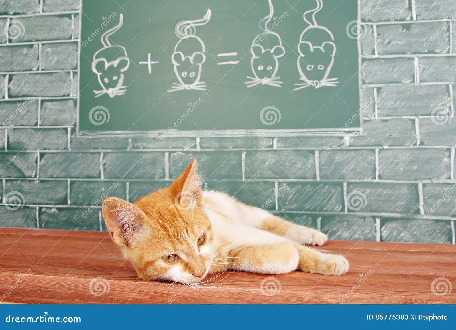 Matematica del gatto