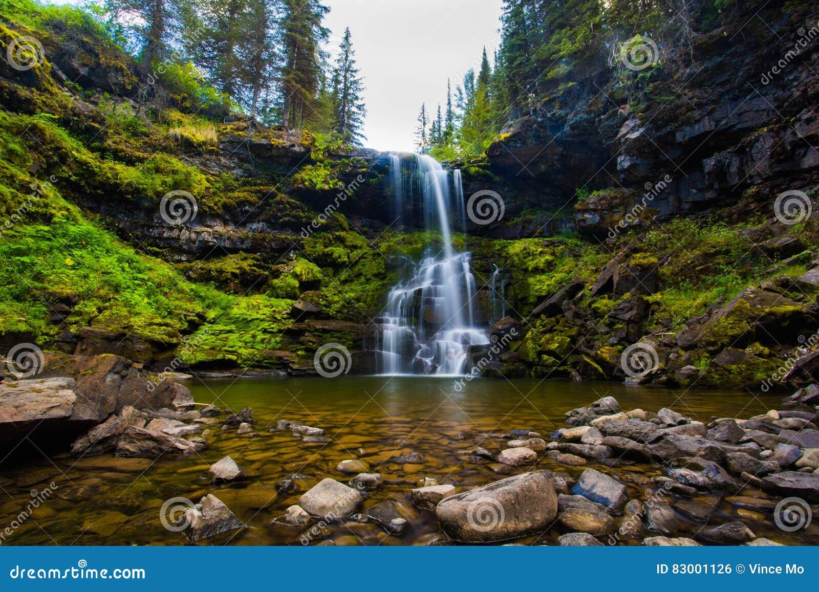 Matherson faller vattenfallet i den underalpina skogen i Fernie British Columbia