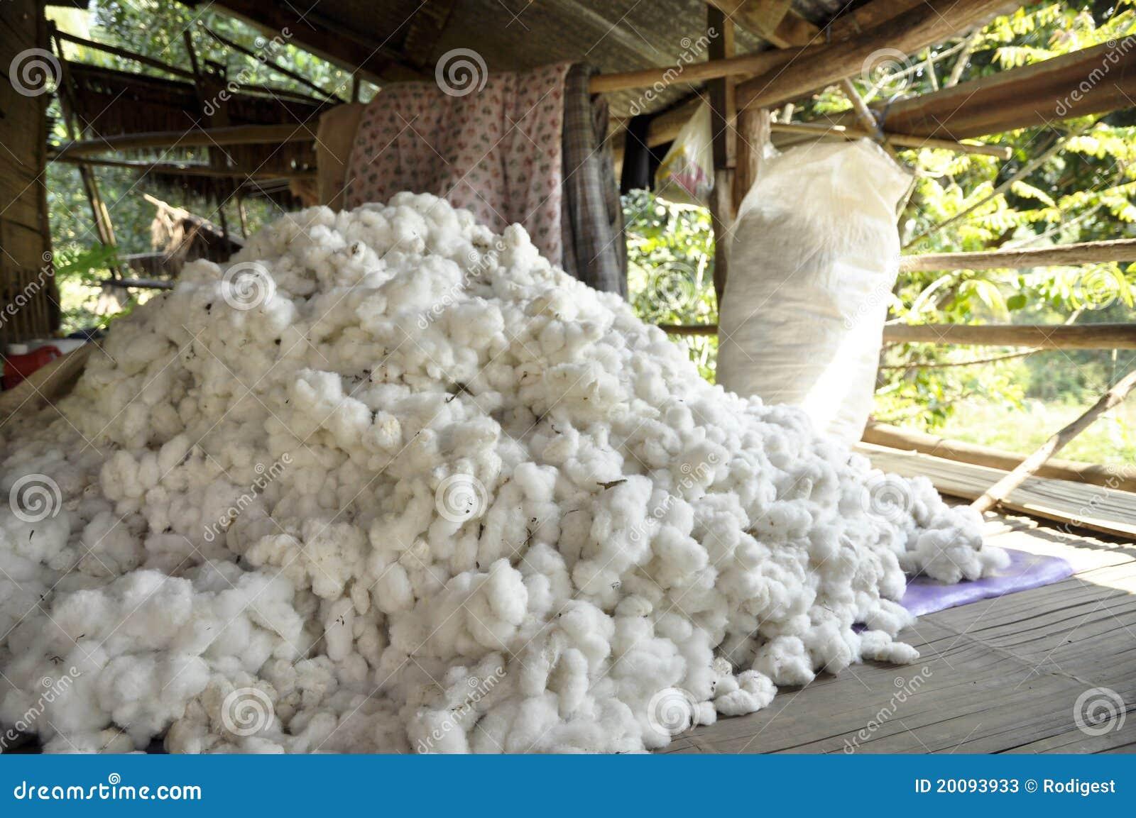 Matière première de groupe de pillule de coton