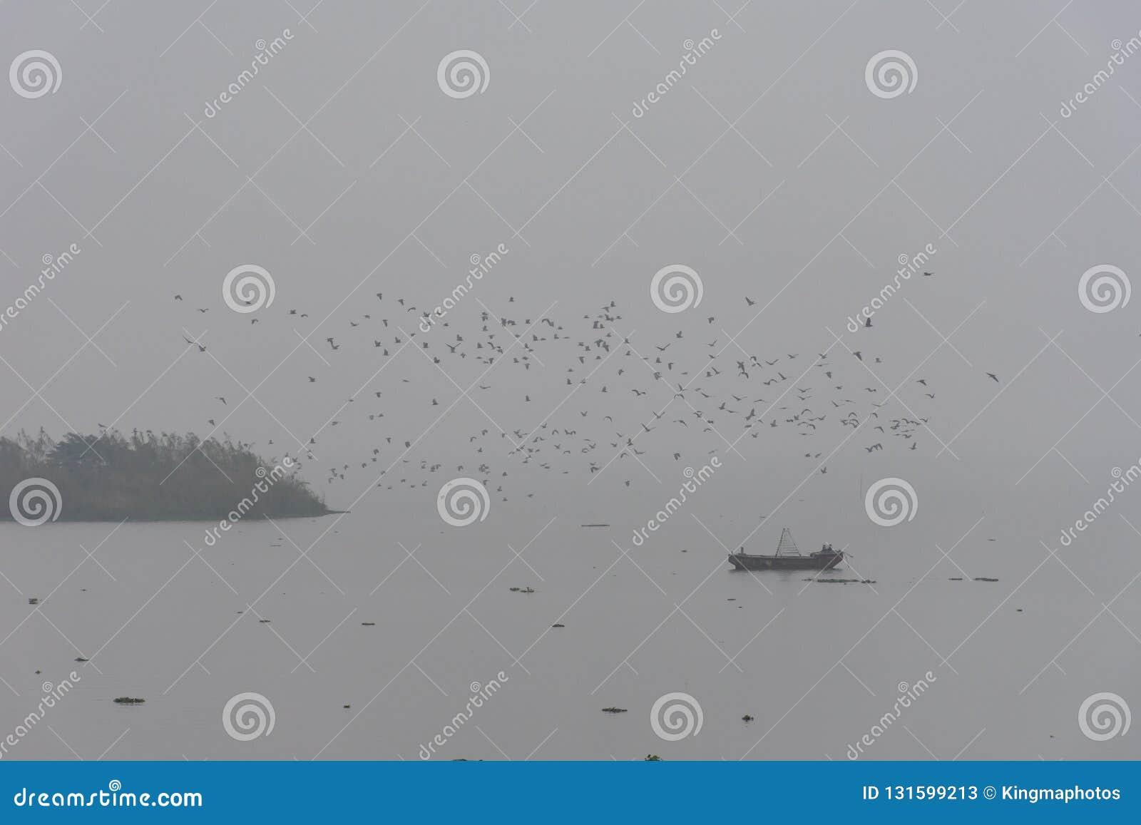 Matin brumeux avec une volée des oiseaux