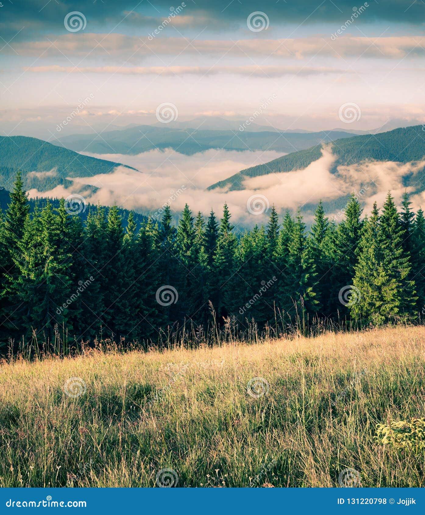 Matin brumeux d été dans les montagnes carpathiennes Scène extérieure pittoresque sur la vallée de montagne en juin, l Ukraine, v