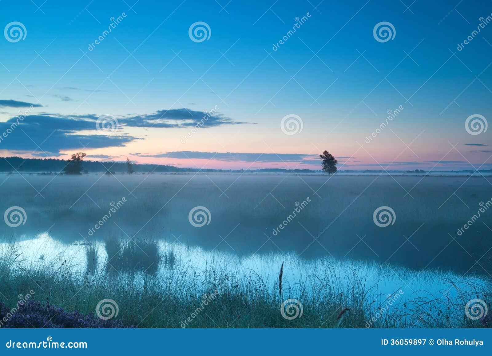 Matin brumeux d été sur le marais