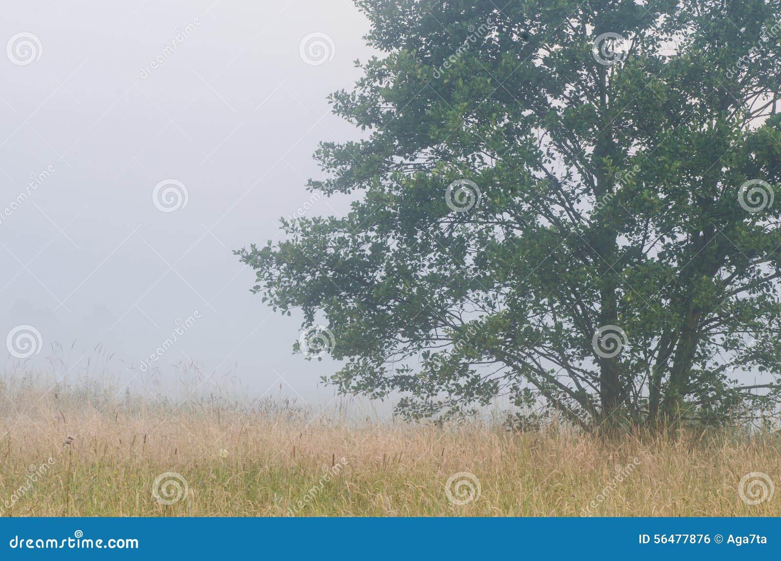 Matin brumeux dans la campagne