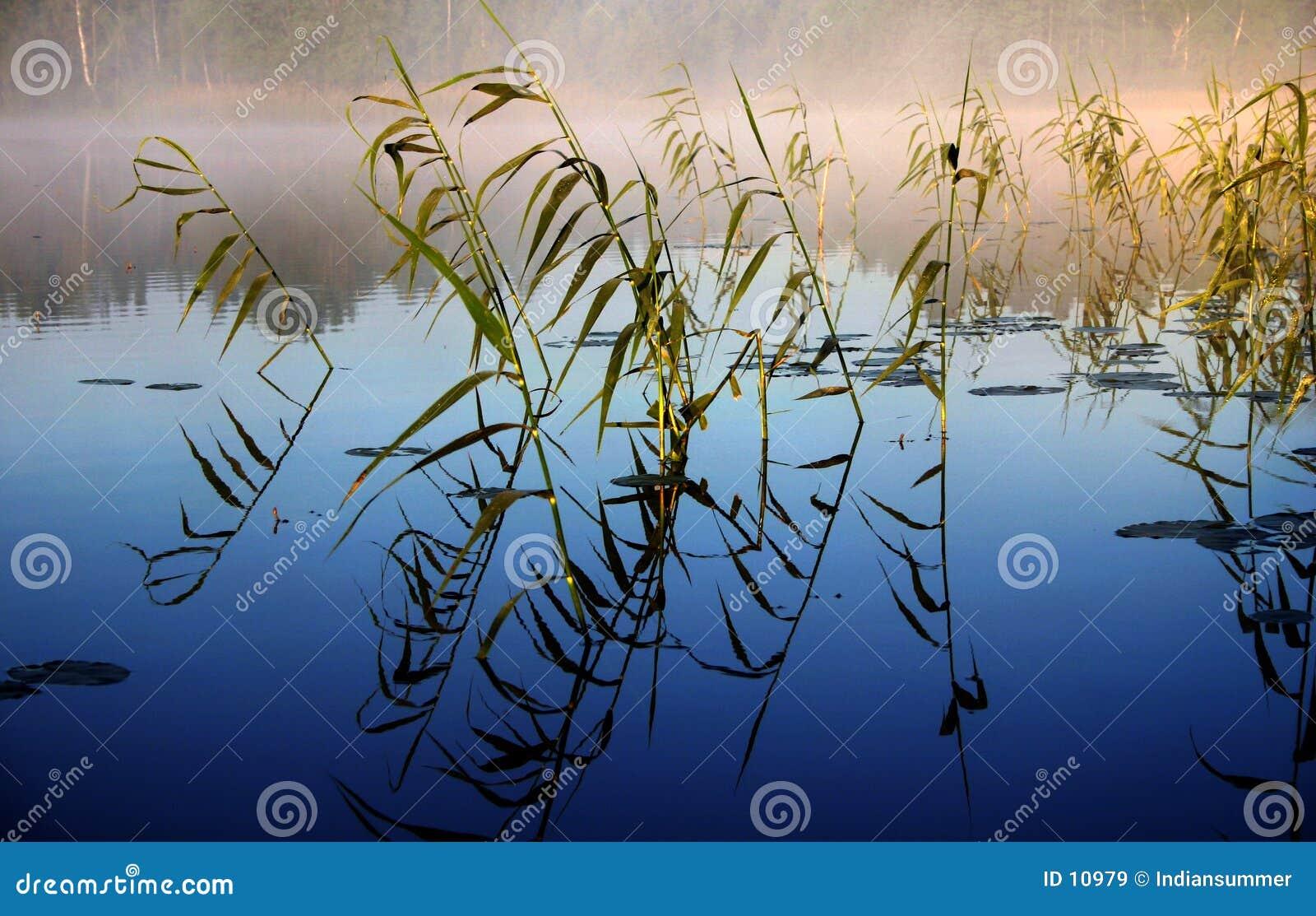 Matin brumeux par le lac, II