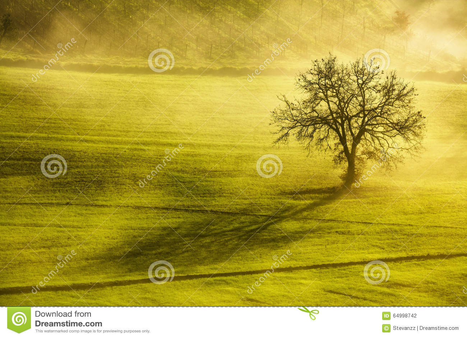 Matin d hiver de la Toscane, arbre isolé et brouillard l Italie