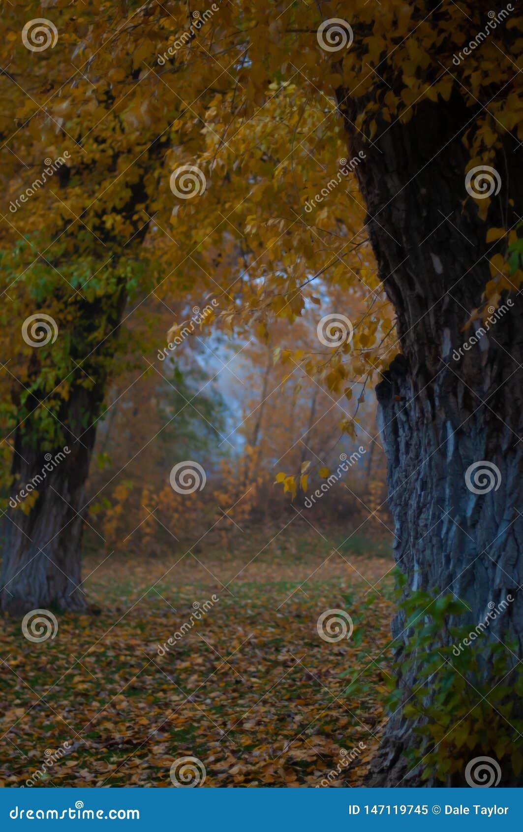 Matin de Misty Autumn dans les bois de Taos, nanomètre