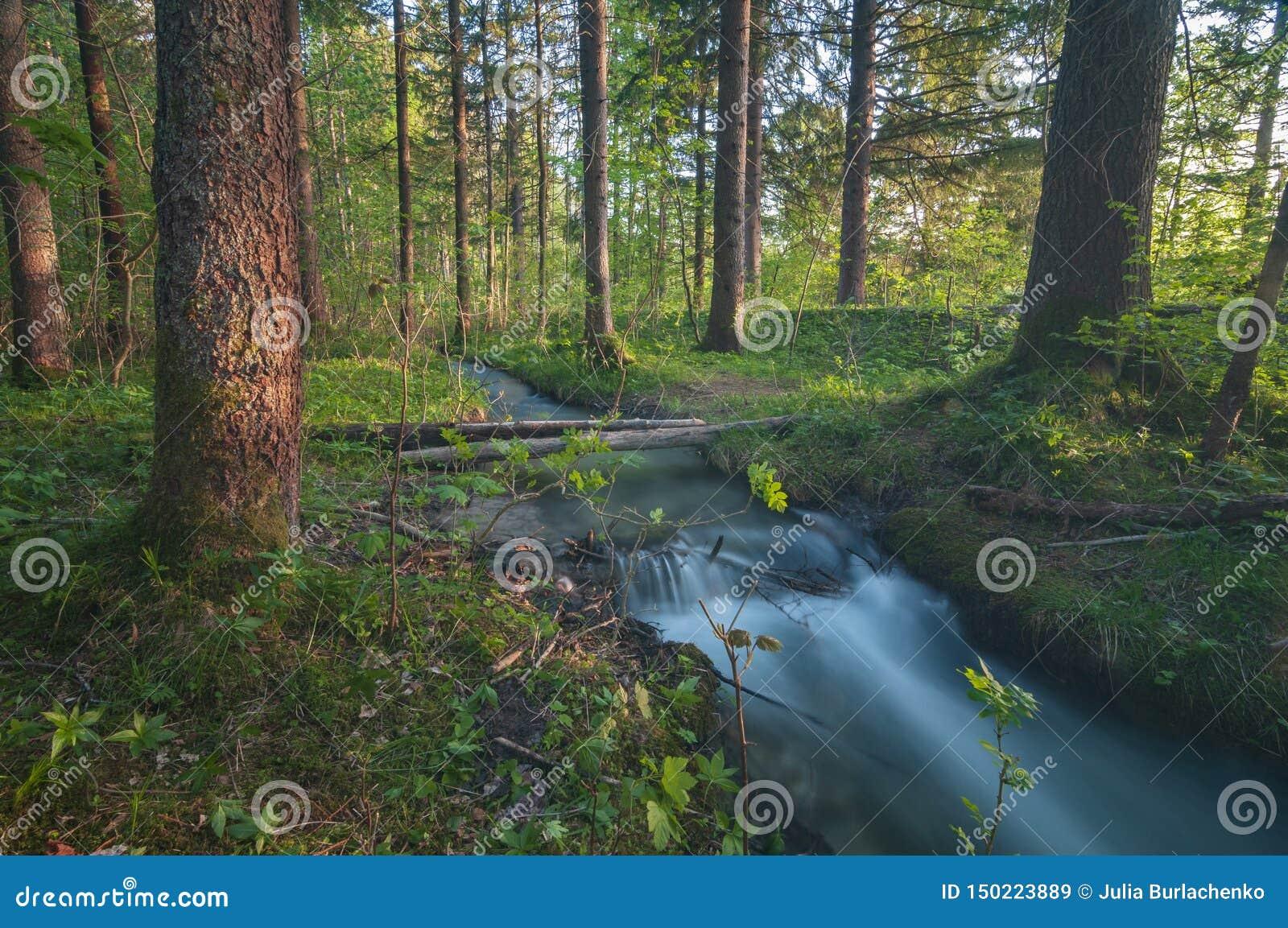 Matin magique dans la forêt