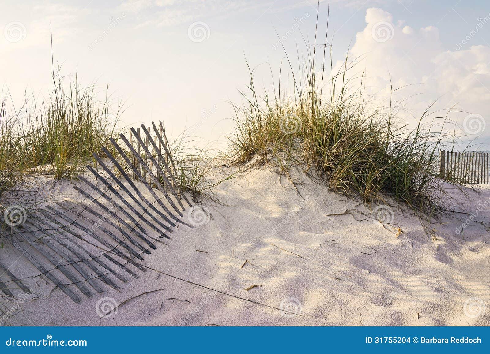 Matin paisible dans les dunes de sable de plage