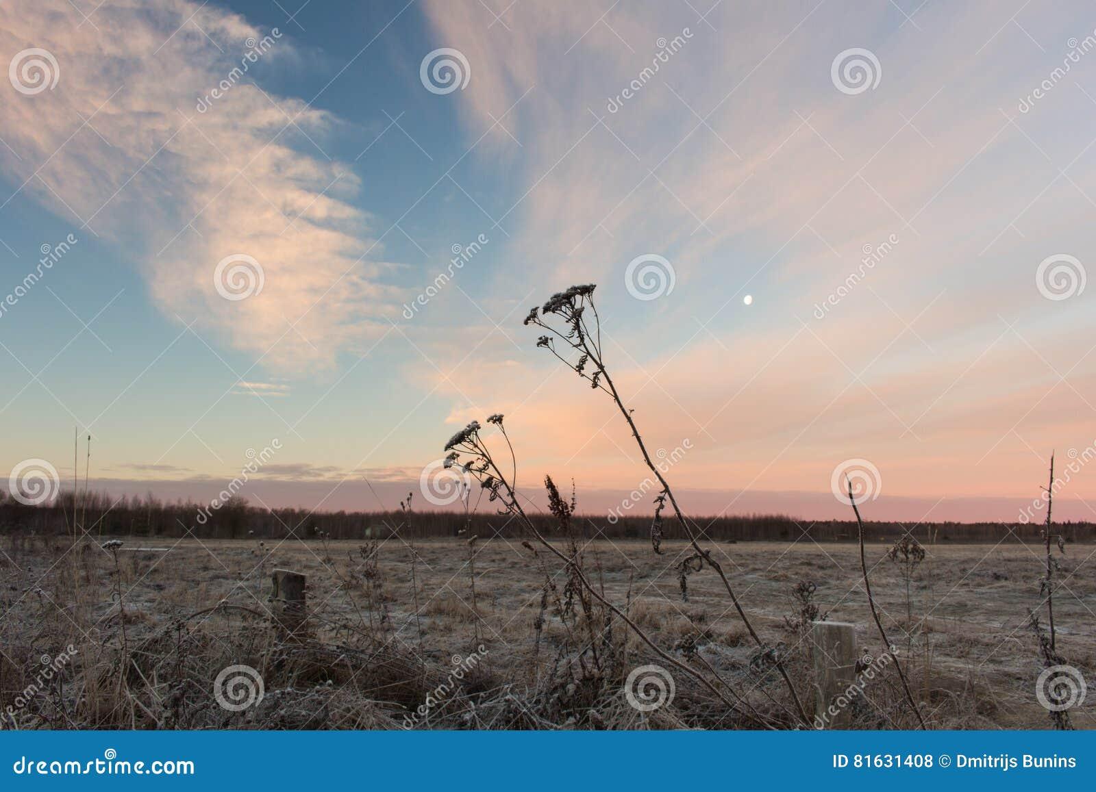 Matin russe rural de campagne Beau lever de soleil rose au-dessus de champ neigeux