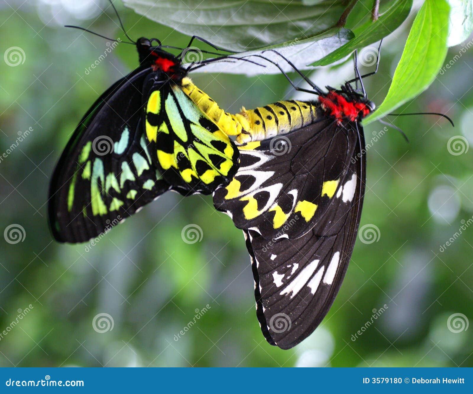 Tropical Rainforest Butterflies - Viewing Gallery