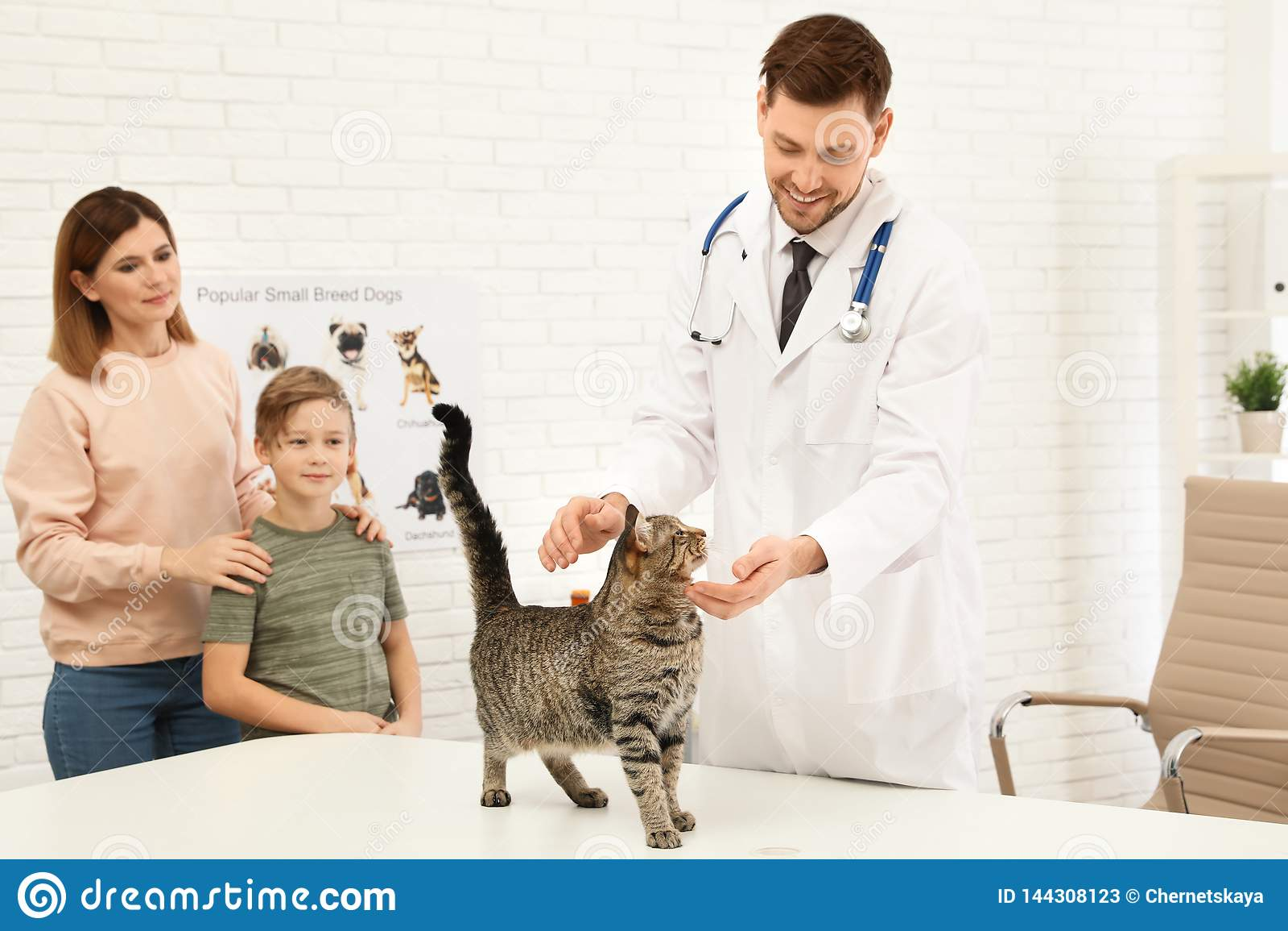 Matka i syn z ich zwierzęciem domowym odwiedza weterynarza Doc egzamininuje kota