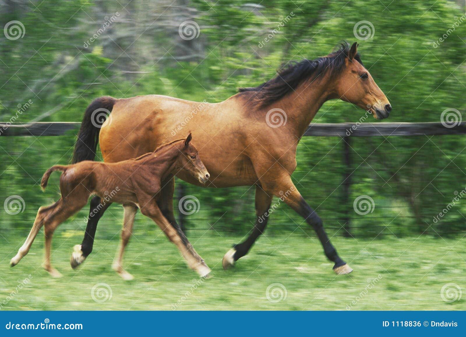 Matka konia