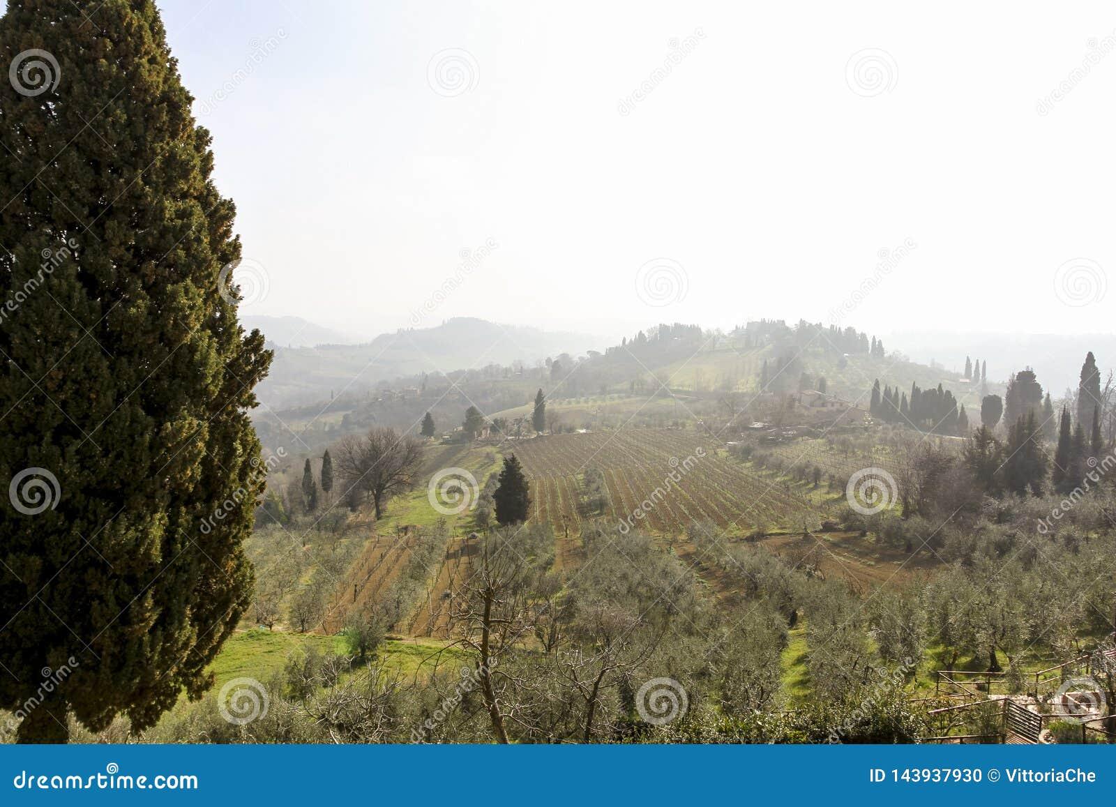 Mattina nebbiosa in anticipo Bello paesaggio della molla in Toscana, Italia, Europa
