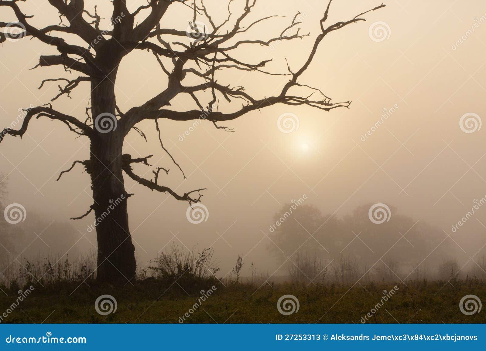 Mattina nebbiosa con l albero