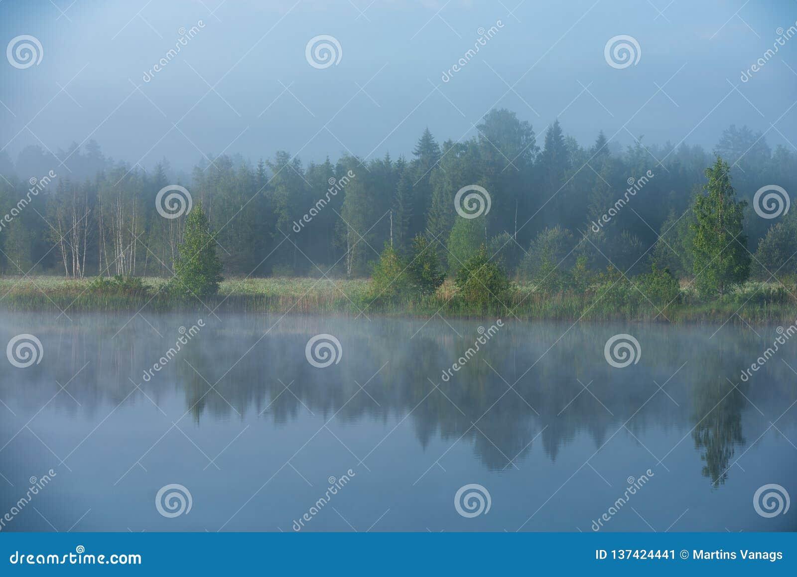 Mattina nebbiosa dal lago