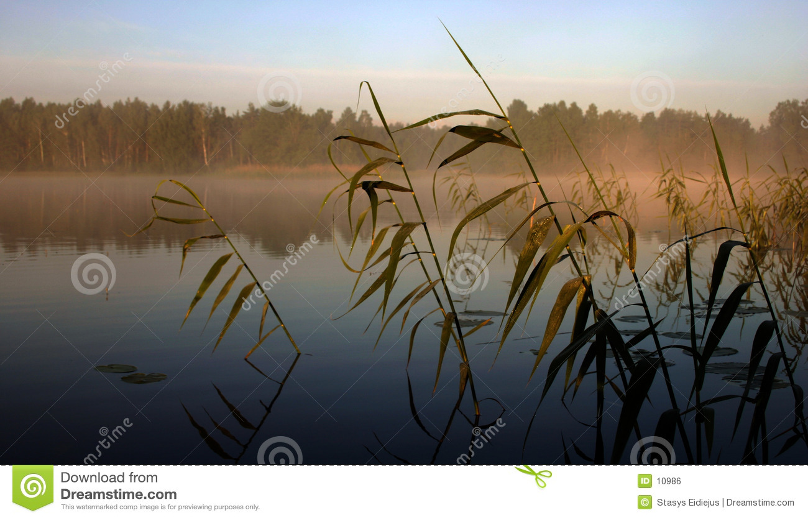 Mattina nebbiosa dal lago, III