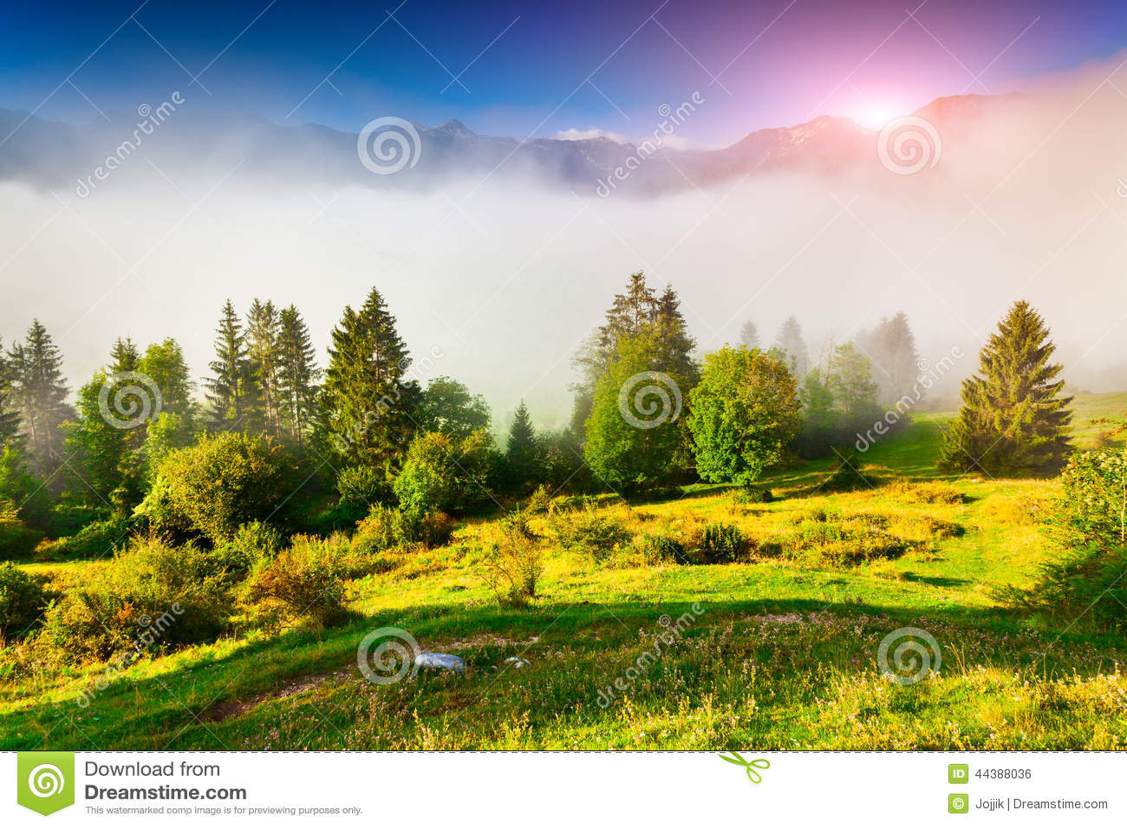 Mattina nebbiosa di estate nel parco nazionale di Triglav, vicino al Bohi