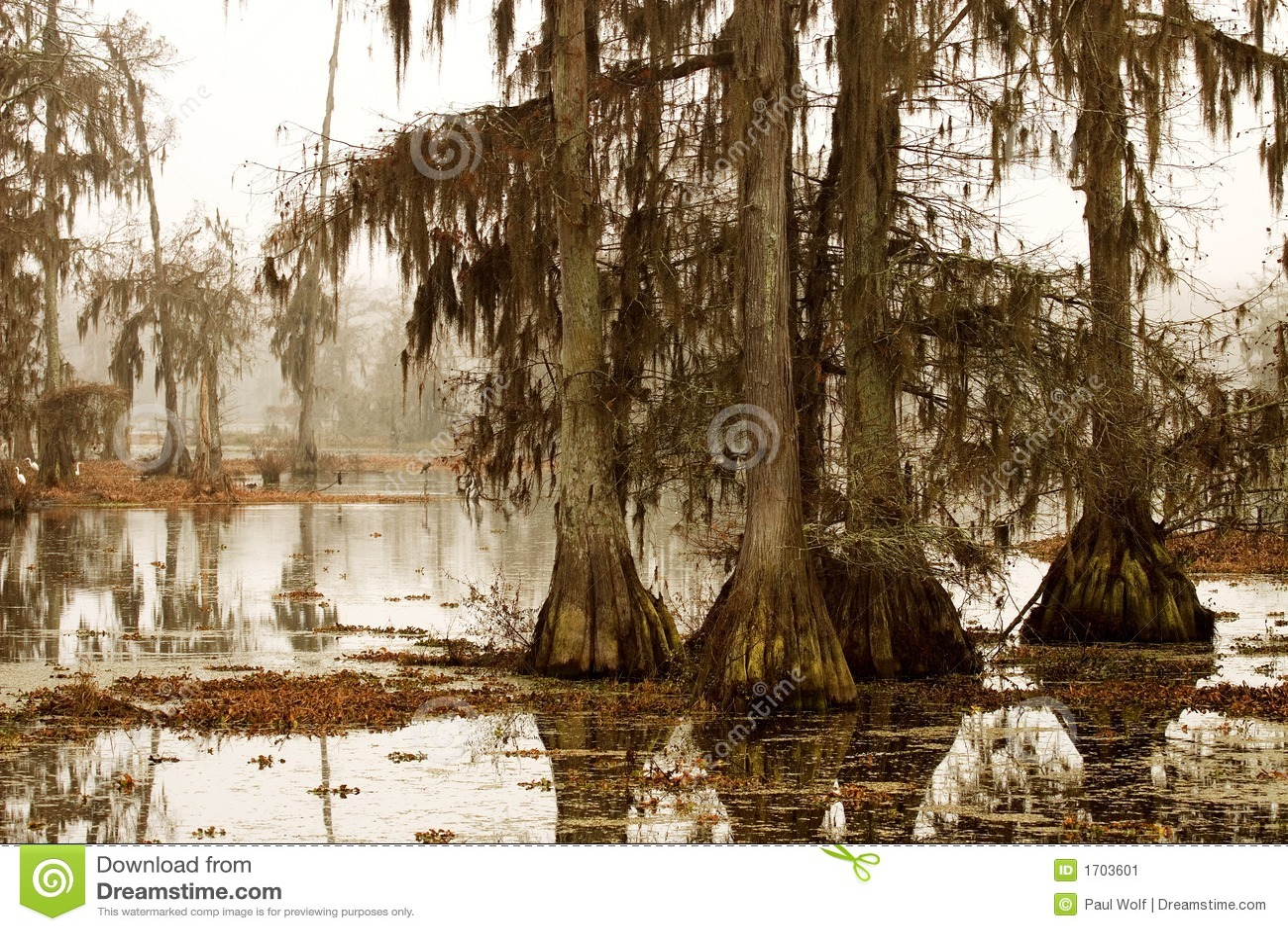 Mattina nebbiosa nella palude