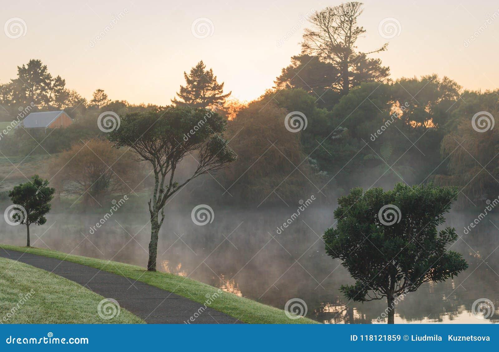 Mattina nebbiosa in Nuova Zelanda