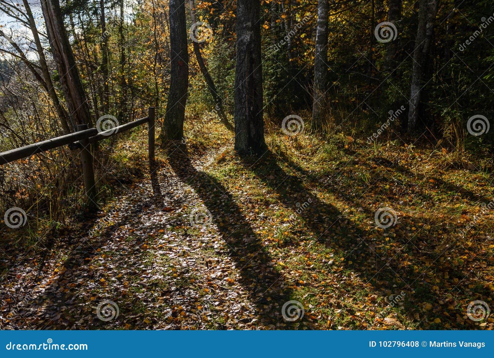 Mattina soleggiata nel legno foresta con i tronchi di albero