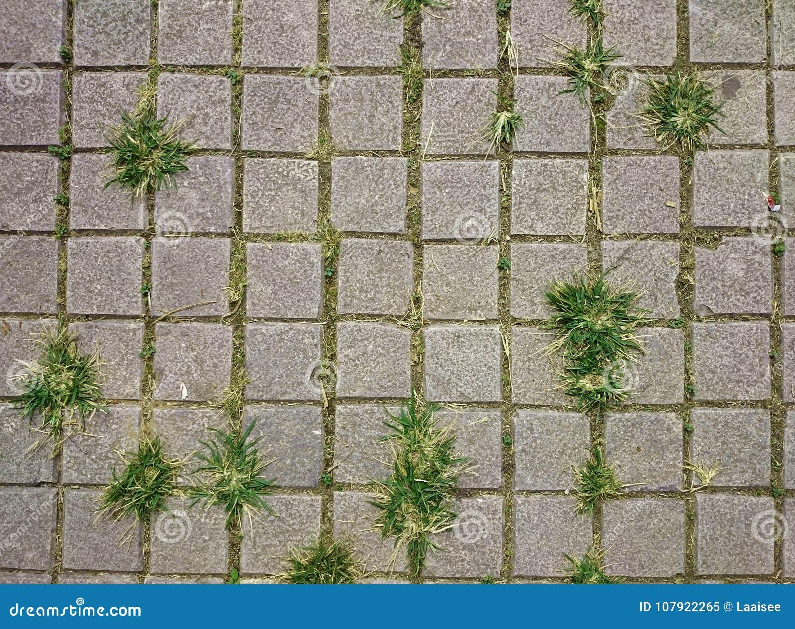 Mattonelle grige quadrate sul pavimento con erba verde e muschio