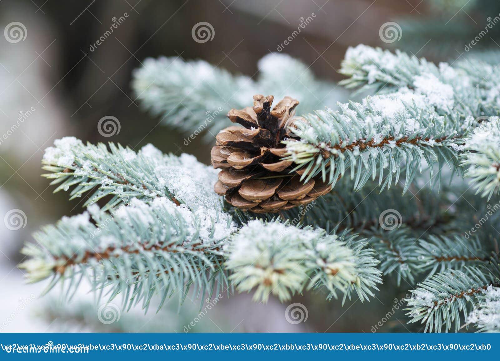Dream Dream Fir, spruce, what dreams of Fir, spruce in a dream to see 55