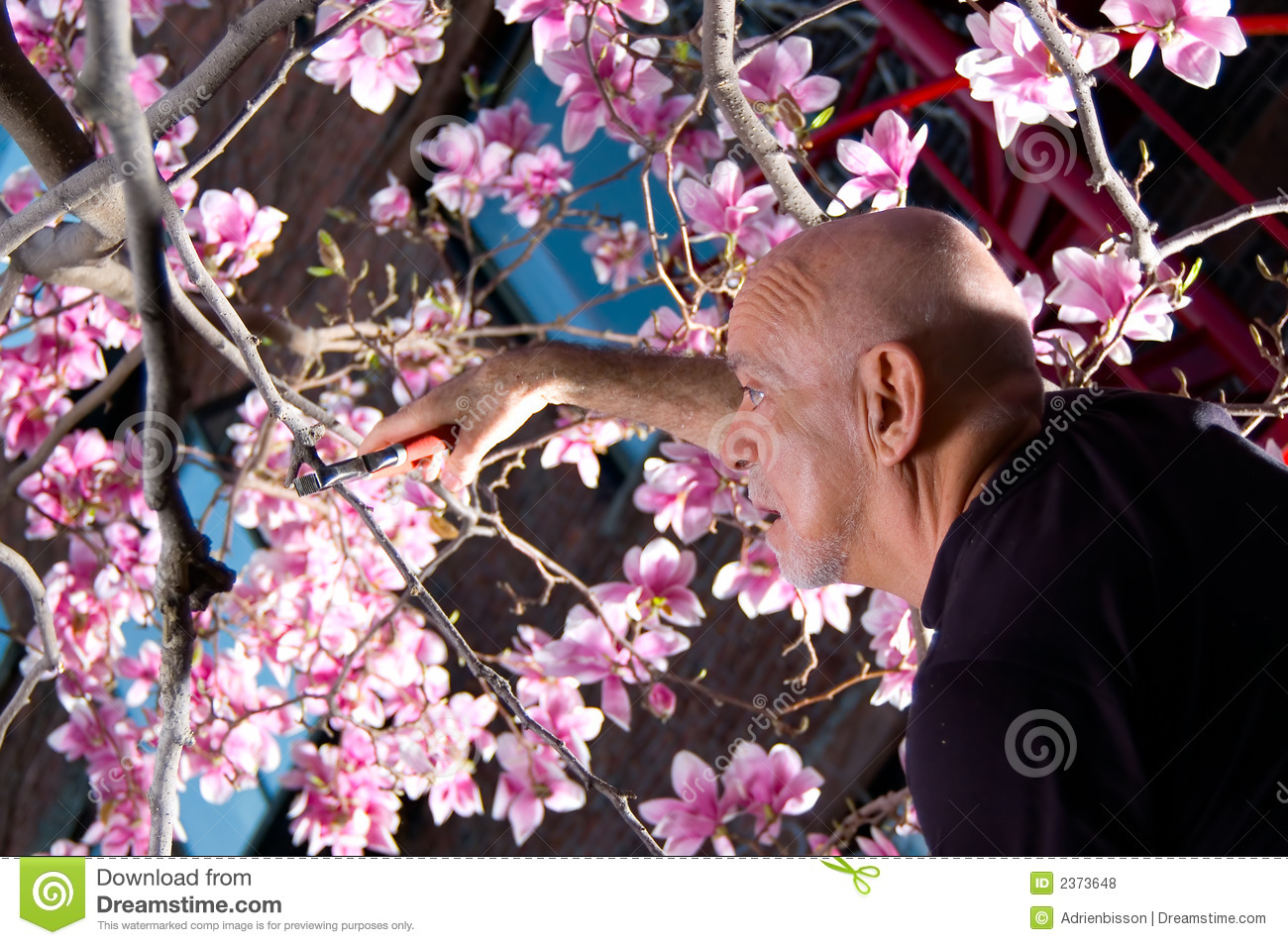 Mature Man Pruning Tree Stock Photo Image Of Person People 2373648