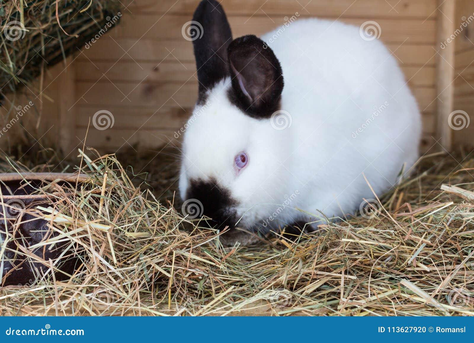 Hoppin jack rabbit dildo