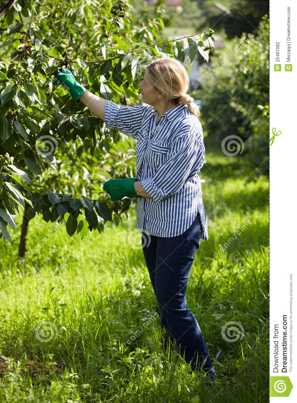 orchard mature women personals South carolina peaches from the orchard, freestone peaches south carolina peaches from the orchard, freestone peaches south carolina peaches from the orchard.