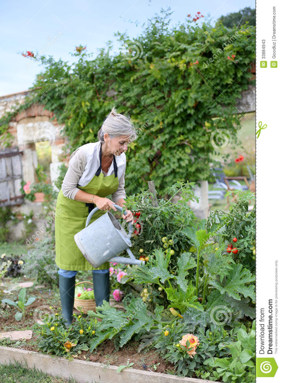Mature woman taking care of garden stock photos image for Watering vegetable garden
