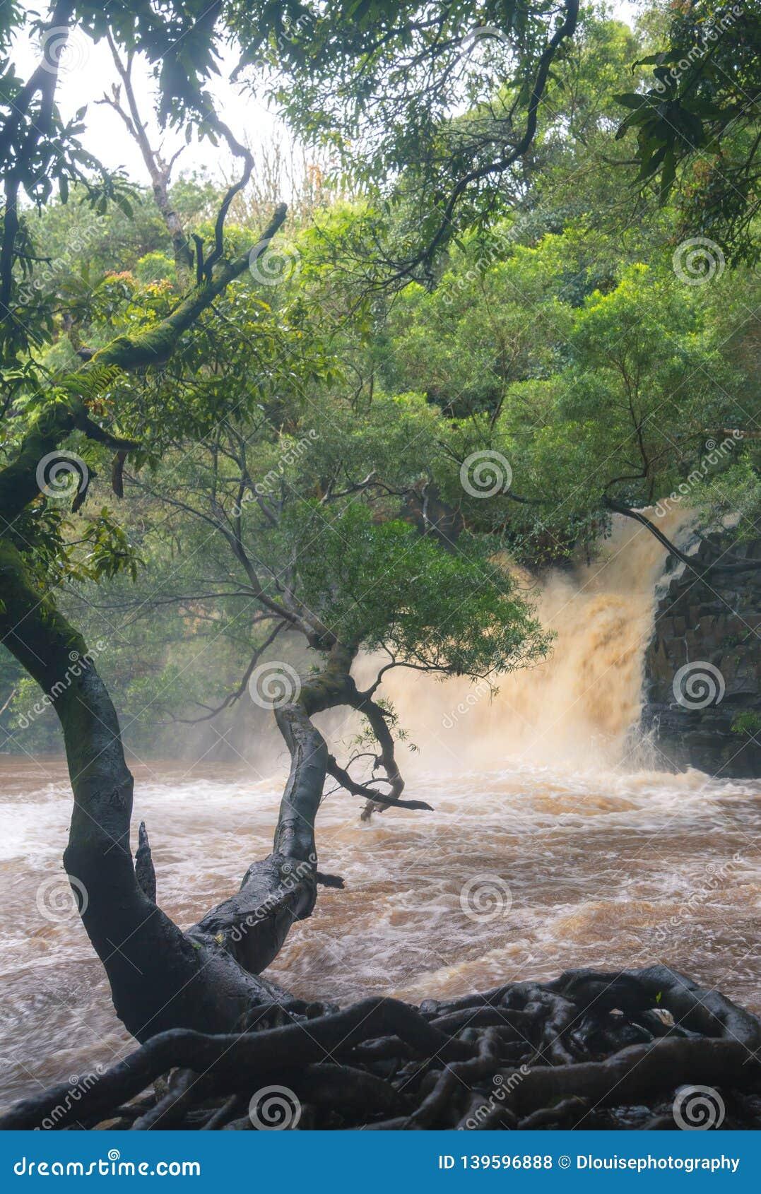 Maui-Flüsse über dem Fließen während der Regenzeit