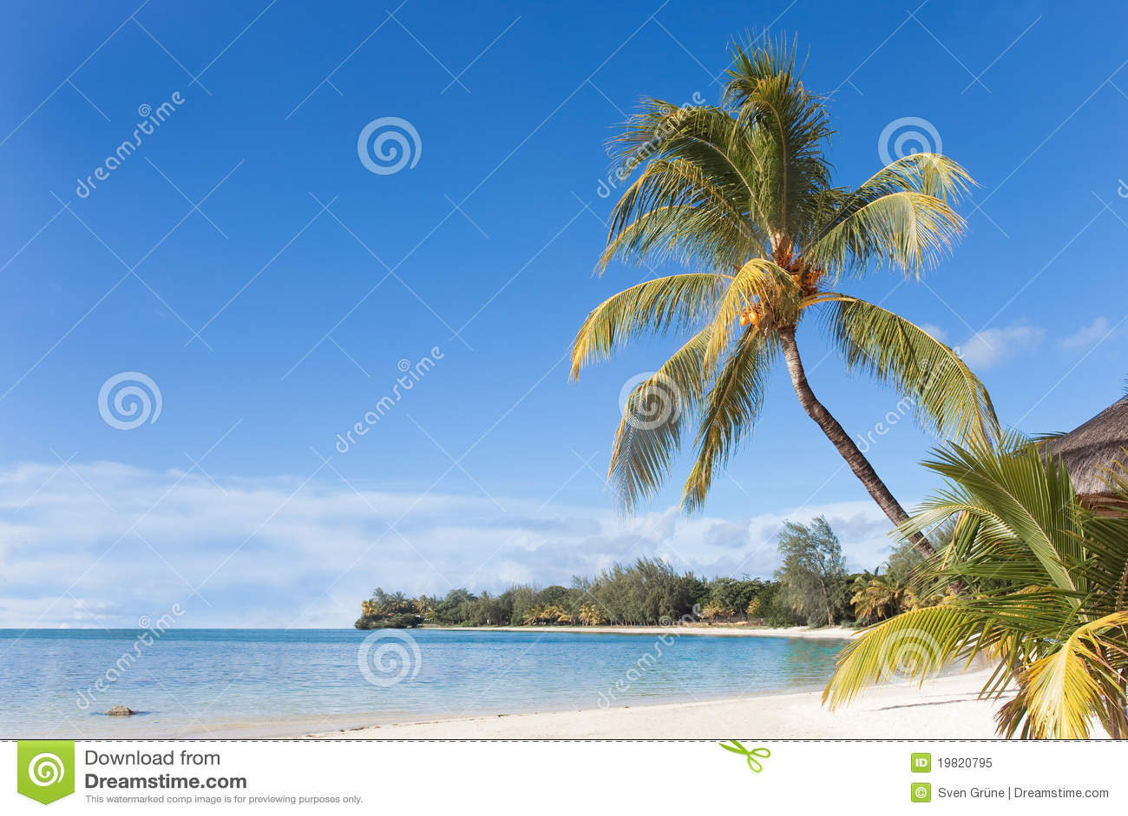Download Mauritius stockbild. Bild von palme, strand, urlaub, feiertag - 19820795