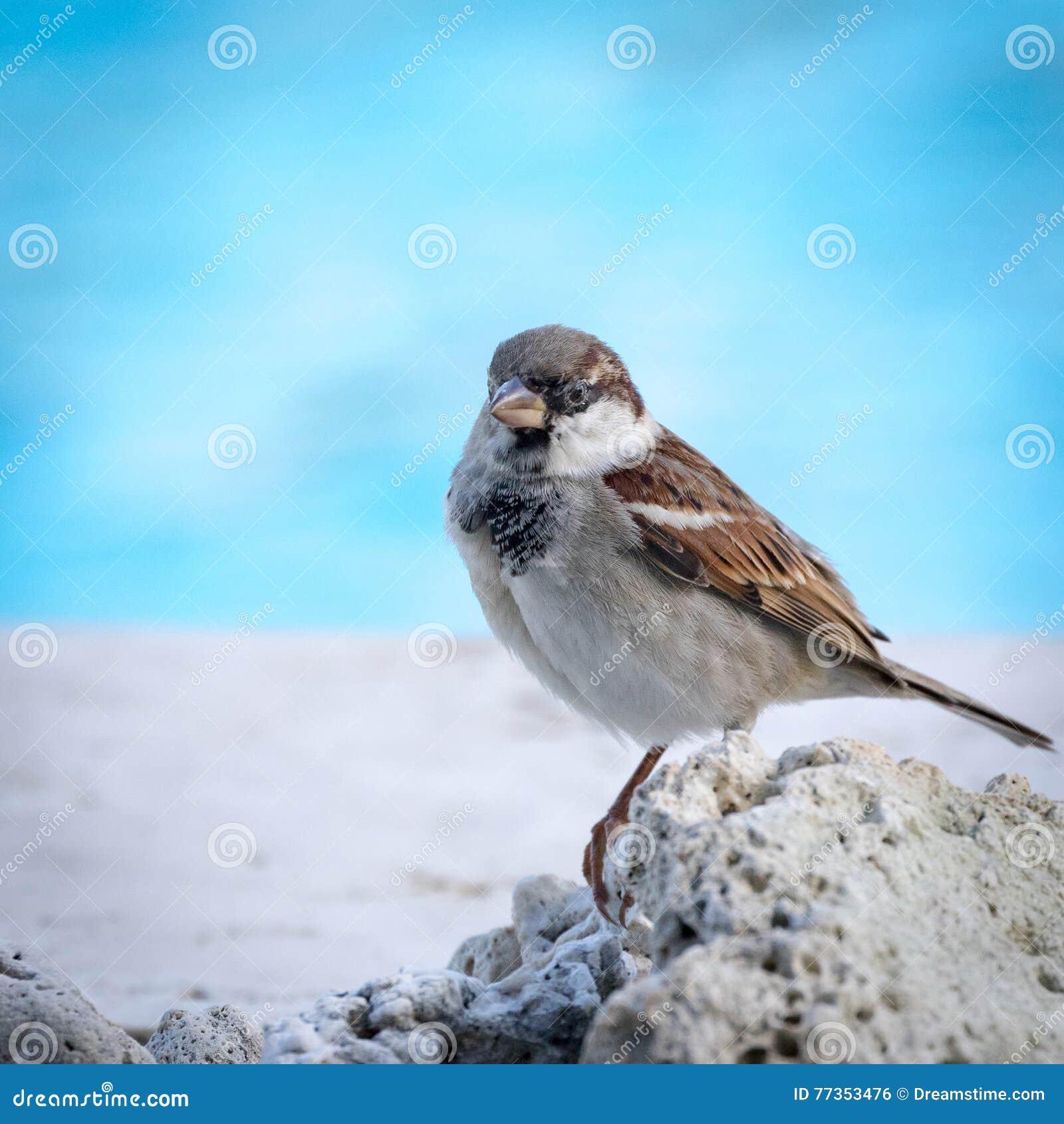 Mauritius Bird se encaramó en coral