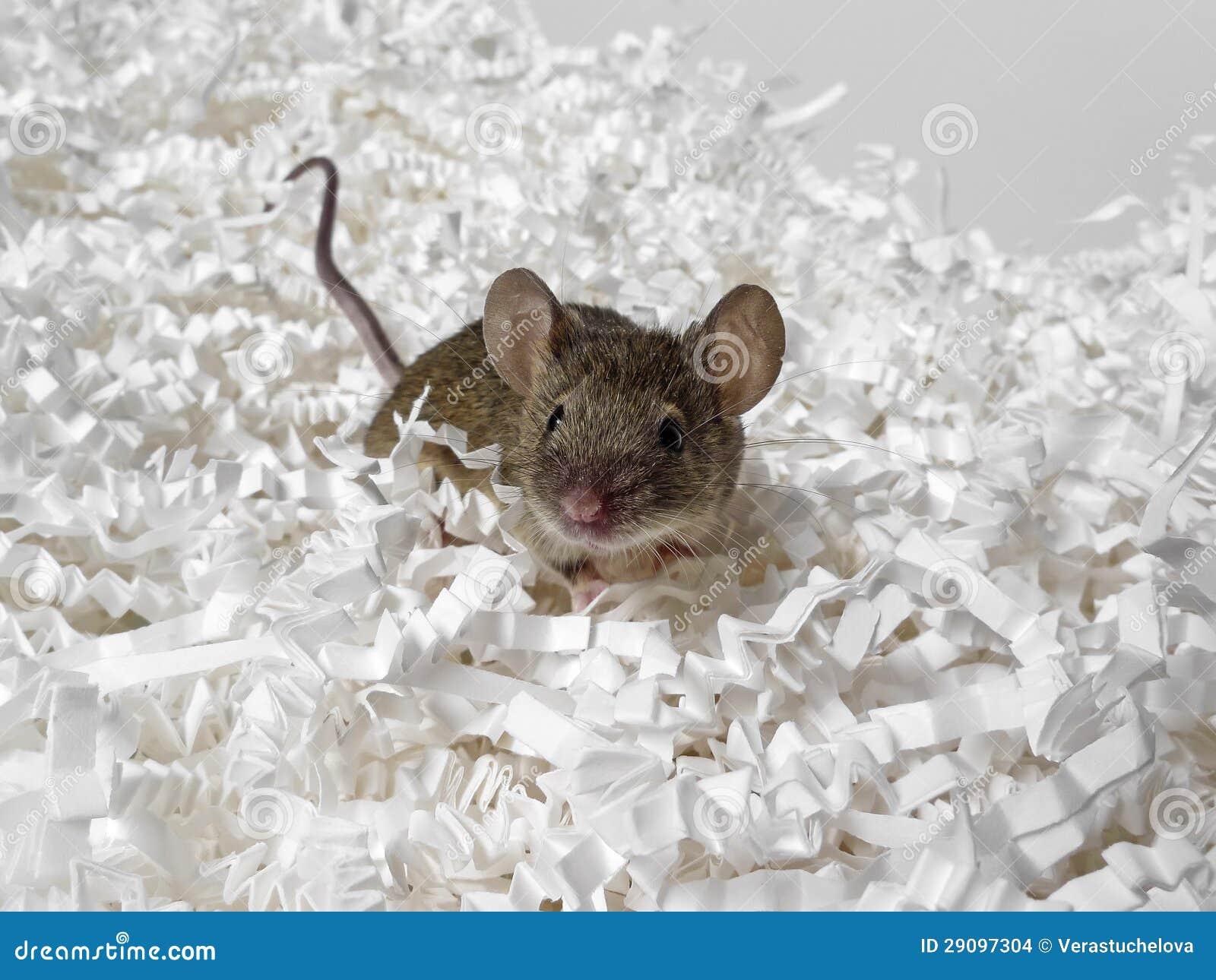 Maus und Papier