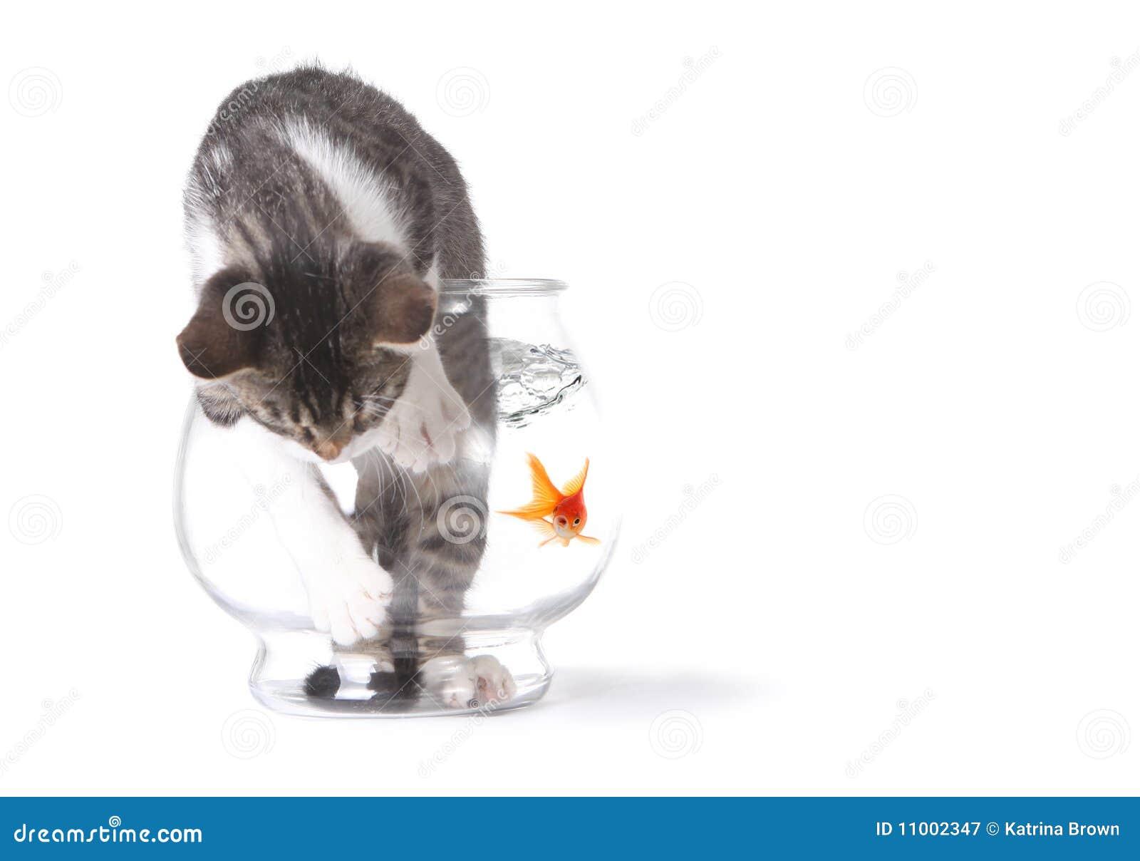 Mauvais chat dans un Fishbowl se conduisant mal
