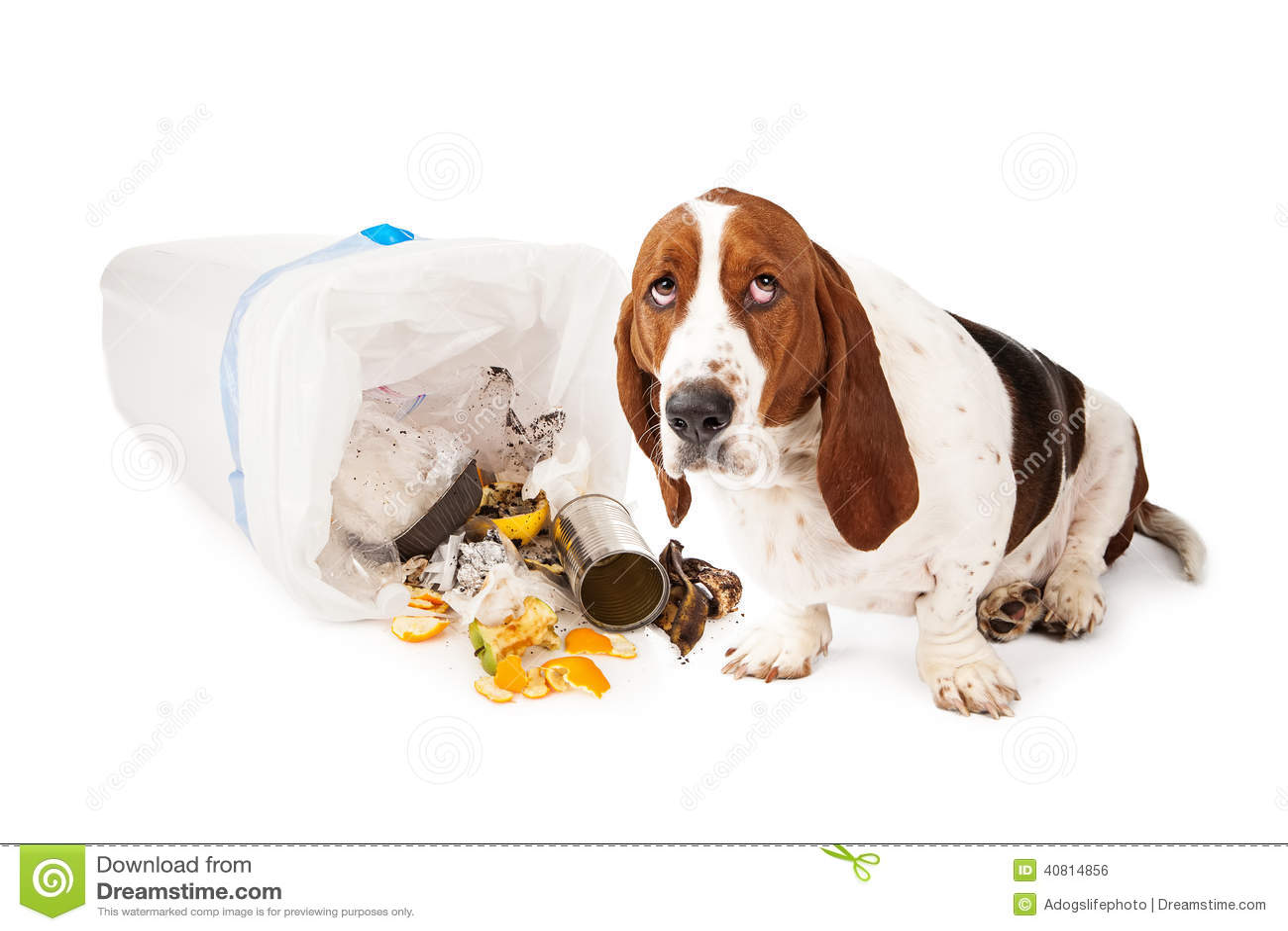 Mauvais chien entrant dans des déchets