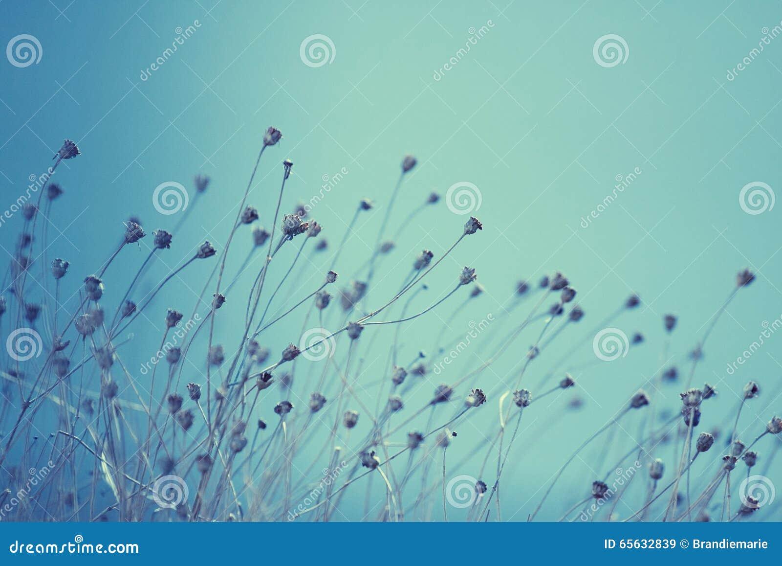Mauvaises herbes au printemps