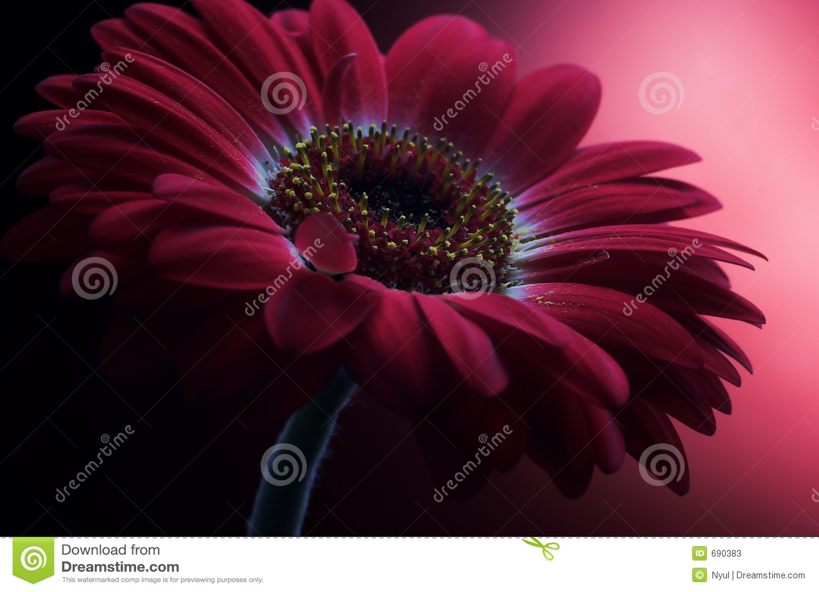 Mauve Flower Composition 1.