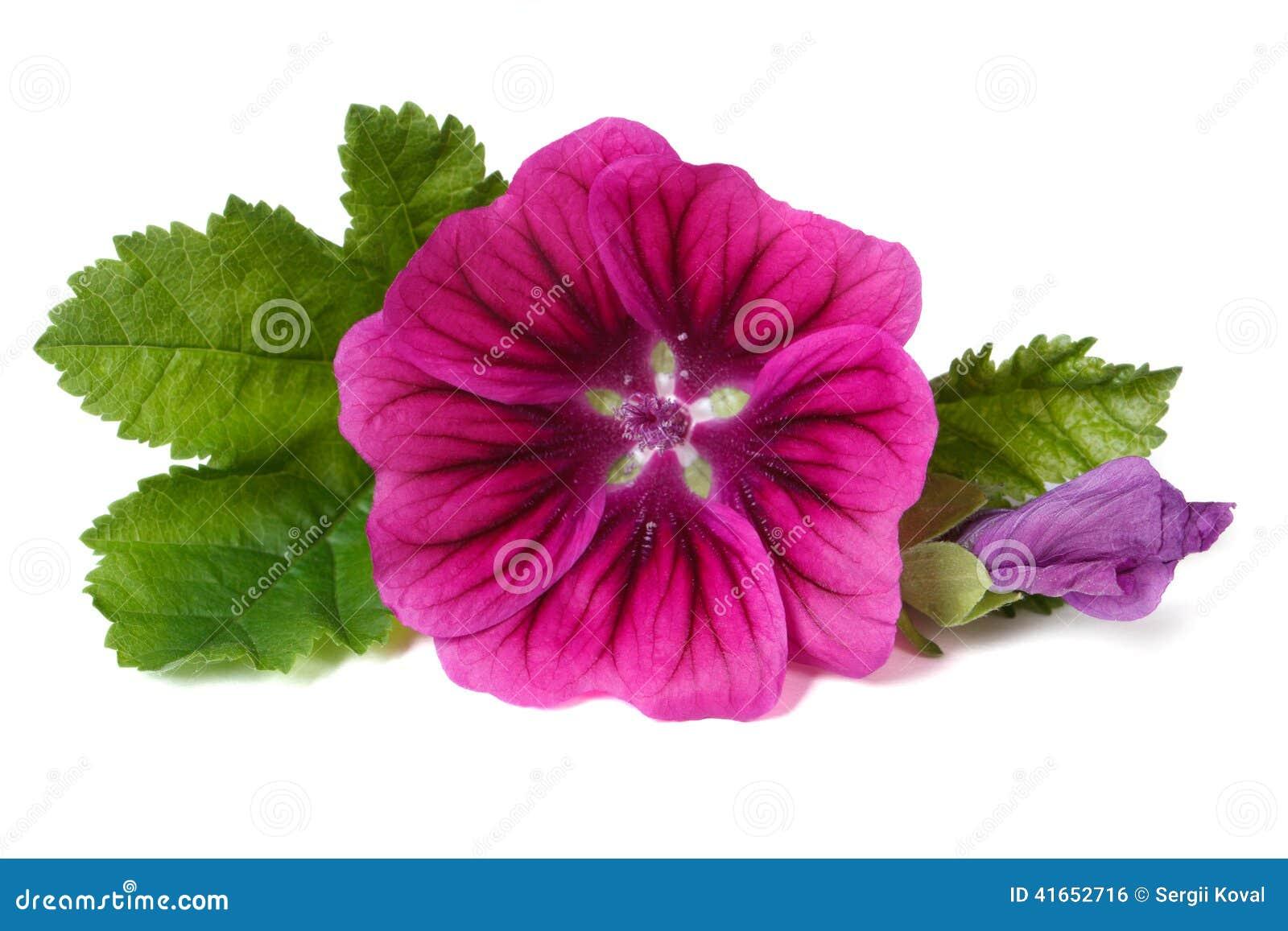 fermez-vous de la fleur sauvage rose et blanche photo stock