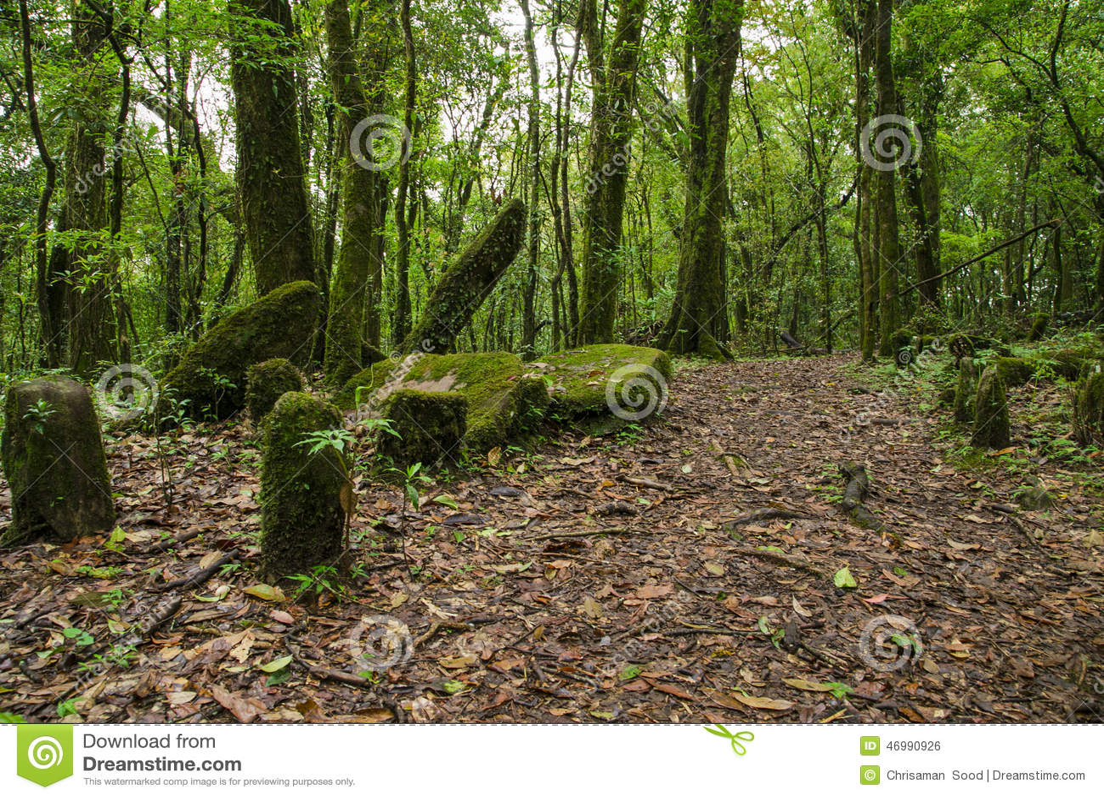 Mawphlang sacré de forêt